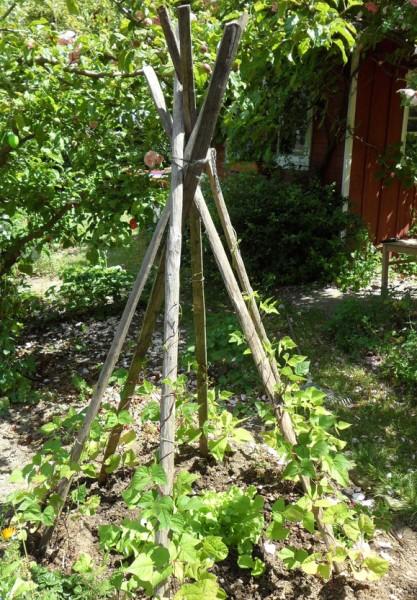 Pflanzpfähle Kastanienholz (Selbstabholung)